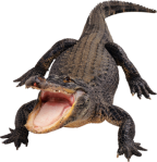 Alligator-psd-Free-Download-1267444406562